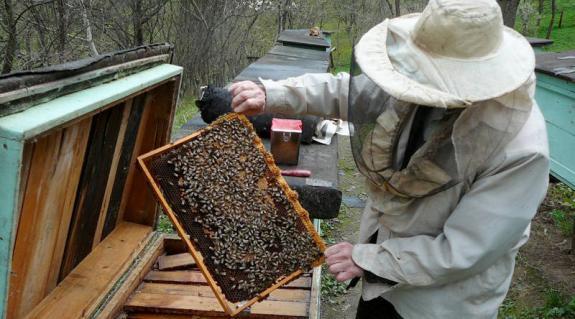 """A méz """"bölcsője"""""""