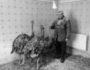 Mitrovics István és a szégyellős struccok