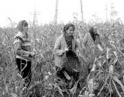Csongori határ – munka közben a György család